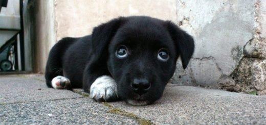 Надругательство над щенком Шанти может обернуться штрафом вместо реального срока