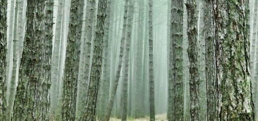 Алтайский лесной чиновник разрешил вырубить лес на 1,8 млн рублей в природном парке