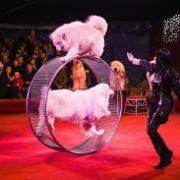 Цирк «Золотой дракон» подал в суд на новосибирскую зоозащитницу