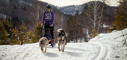 Гонки на собачьих упряжках «По седому Алтаю» пройдут 15 февраля