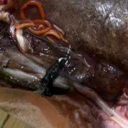 В новосибирских магазинах продают рыбу с червями