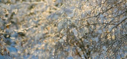 Мощная волна тепла идет в Алтайский край