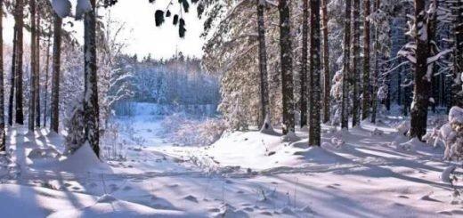 Контрабандисты в Томске заготовили лес на полтора миллиарда рублей