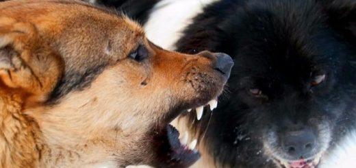 Стая бездомных собак напала на маленькую девочку в Красноярском крае