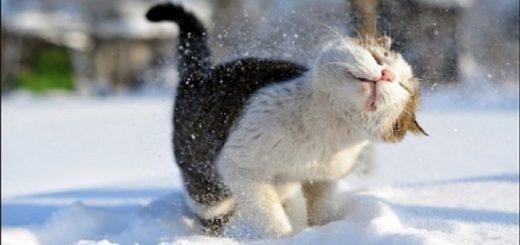 Мокрый снег и тёплая погода придут в выходные в Новосибирск