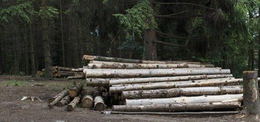 На алтайской трассе грузовик с лесом перевернулся в кювет