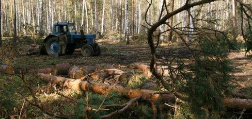 Как отличить валежник от деловой древесины – комментарий министра