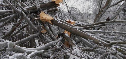 Снежный шторм вновь обрушился на Алтайский край