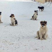 Пятеро щенков, найденных на морозе, ищут хозяев в Новосибирске