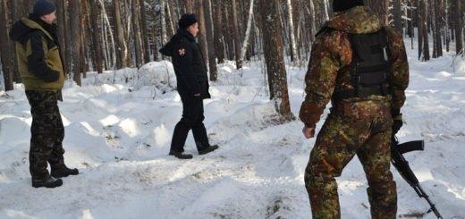 323 факта незаконной рубки леса выявили в Алтайском крае