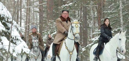 Эксперт: конь Ким Чен Ына мог быть куплен на Алтае