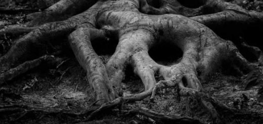 Закопанным в лесу нашли пропавшего в октябре новосибирца