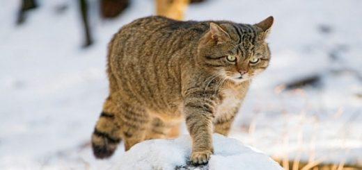 Тёплая снежная погода пришла в Новосибирск
