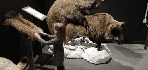 Православный активист оскорбился, что спаривание животных увидят дети