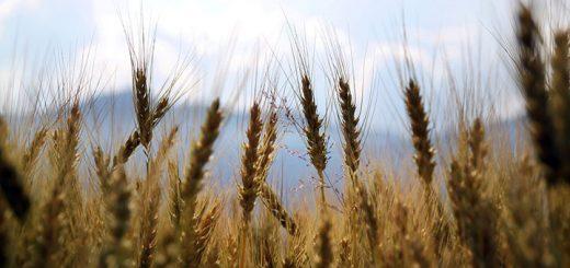 Около 231 млн рублей направили алтайские аграрии на покупку сельхозтехники