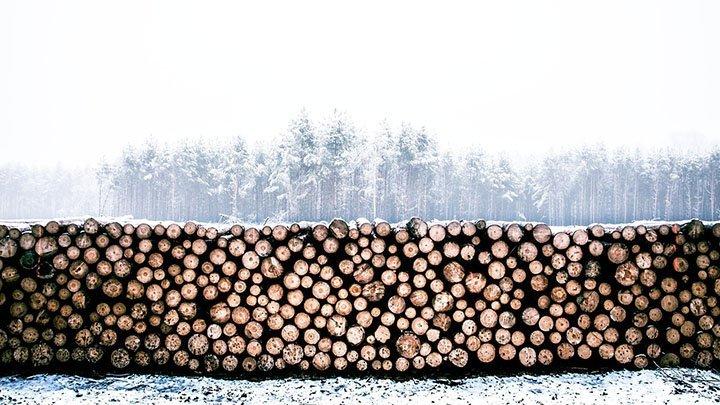 Иностранного бизнесмена будут судить за контрабанду леса из России
