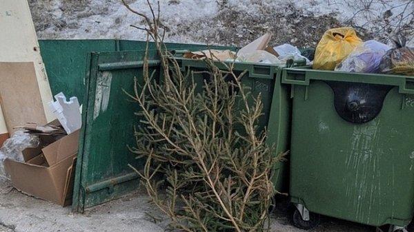 В Новосибирске в конце марта выбросили новогоднюю ёлку