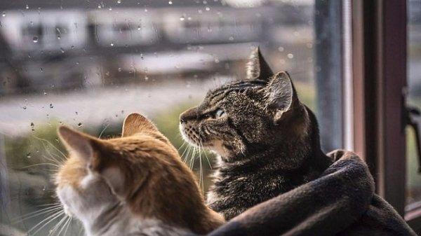 Дождь и снег ожидают новосибирцев в выходные